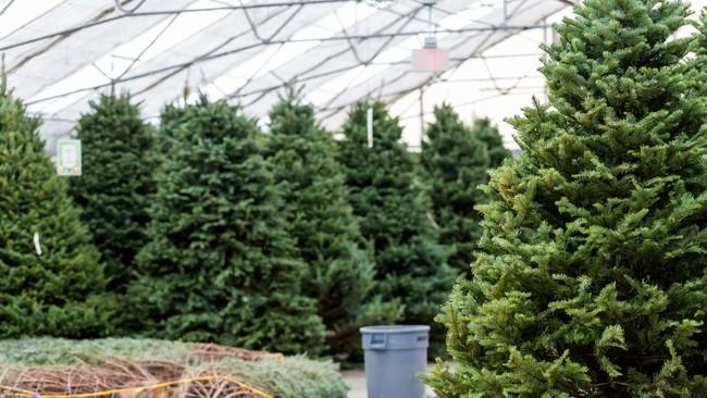- Holiday Hacks To Keep Your Real Christmas Tree Fresh All Season