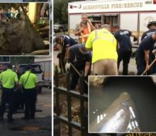 950-Pound Manatee Rescued After Being Stuck in Storm Drain: 'Every Life Is Precious'