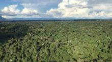 """Minería en la Amazonía brasileña: indígenas reviven """"recuerdos del período terrible"""""""