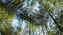 Ken Thompson: why are monster-sized leaves typically tropical?