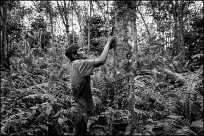 Pirelli: A Journey Through Images Between Thailand And Indonesia To Promote Awareness Of The World Of Natural Rubber
