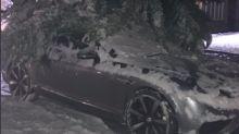 Footballer Michael Owen finds car buried under tree