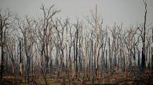Incêndios na Amazônia brasileira disparam em julho