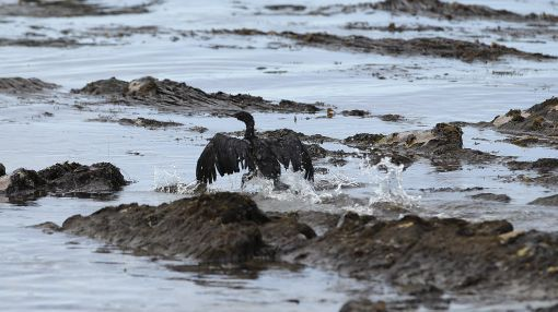US senate committee probes pipeline safety after oil spills