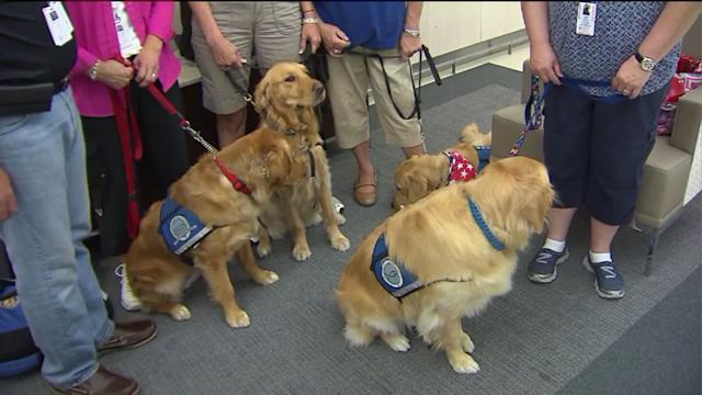 Illinois comfort dogs head to Arizona to help wildfire victims