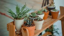 Purify the air in your home with these indoor plants