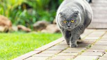 PSA: You Really Need To Stop Feeding Your Neighbour's Cat