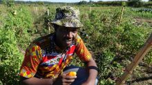 Youth Now Farm grows job skills along with vegetables