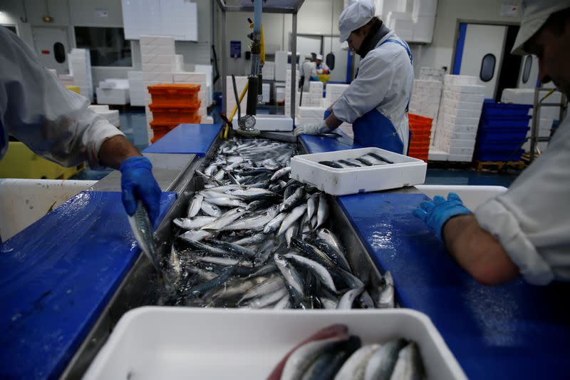 FILE PHOTO: French workers fillet mackerels in a fish processing plant in the port of Boulogne-sur-Mer, France