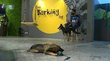Saudi Arabia's first dog cafe delights pet lovers