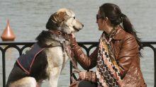 Una asociación catalana rescata perros miedosos abandonados en toda España