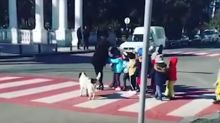 #GoodNews: 'Good boi' doggo helps children cross the street every day, barks at errant drivers
