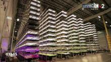 Dans la plus grande ferme verticale et urbaine du monde près de New York : un rêve ou un cauchemar pour le futur ?