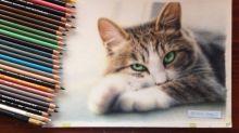 【有片】日本高手木顏色畫貓 縮時影片畫隻眼