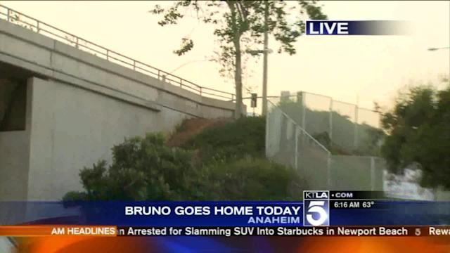 Injured Anaheim Police Dog Bruno Set to Go Home