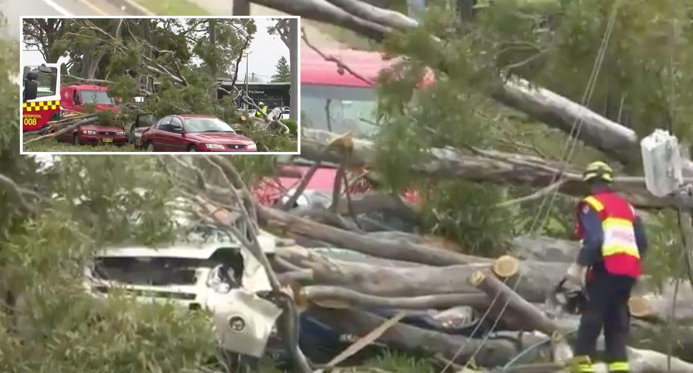 Cars trapped by falling tree as extreme winds and dust storms lash NSW