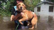 PETA Animal Rescue Team Saves Dogs and Cats Trapped by Floodwaters