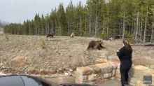 Grizzly runs toward woman in Yellowstone, video shows. She's now under investigation
