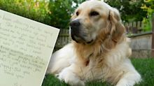 Canberra stranger's 'beautiful but sad' note to dog owners