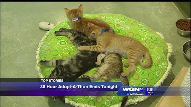 PAWS Chicago Adopt-A-Thon to end tonight