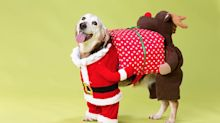30 festive gifts for your furry friends