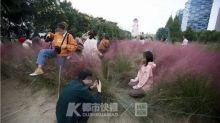 Chinese tourists' selfie mania destroys rare pink grass