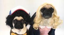 The ultimate pet costumes for Halloween and beyond