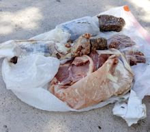 15 Pounds of Frozen Meat Falls From Sky on Florida Man's House