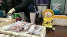 Gato vendedor de peixe faz sucesso na internet
