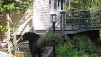 Woman Scares Bear By Yelling