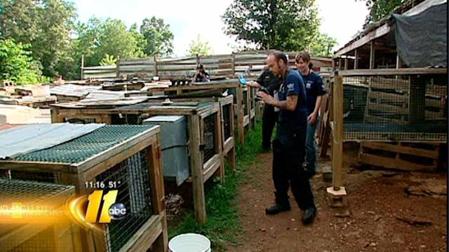Puppy mills could face new restrictions in NC