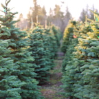 Christmas tree sales are surging—here's where you can still buy them online