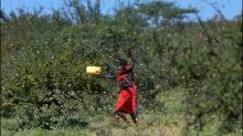 """Welthungerhilfe fürchtet """"apokalyptische"""" Folgen der Heuschreckenplage in Afrika"""