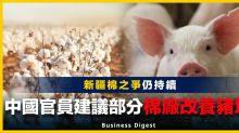 【新疆問題】新疆棉之爭仍持續,中國官員建議部分棉廠改養豬場