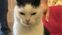 """Böser als Grumpy Cat: """"Arsch-Katze"""" Perdita sucht ein Zuhause"""