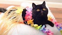 Black Cat Named Willow Is Rocking Halloween With Daily Instagram Costumes