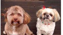 Nuevo reto viral: ¿A qué estrella se parece este perrito?
