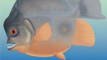 In toothy prequel, piranha-like fish menaced Jurassic seas