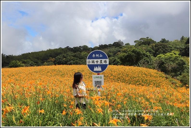 赤柯山金針花(小瑞士農場)-2018-08-34.jpg