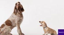 Top 5: Cinco récords Guinness de perros