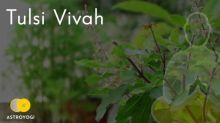 Tulsi Vivah 2020: Significance Rituals and Traditions