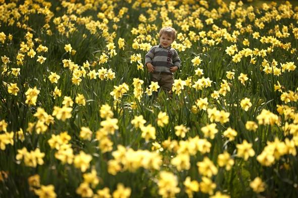 """<p> <span style=""""font-size:10pt;"""">""""These bright yellow bulbs are already beginning to burst into life, heralding spring as they spread outwards from the south west to the rest of the country,"""" says Matthew.</span></p> <p class=""""p1""""> <strong>Top spot for daffs:</strong>Sizergh Castle, Cumbria.Wordsworth's famous poem was inspired by a beautiful belt of wild daffodils in Cumbria. The wild variety found here has a particular beauty. Dora's Meadow at Grasmere, created by Wordsworth in memory of his daughter, will also be open for daffodil-viewing under the National Gardens Scheme on 1 April.</p> <p class=""""p1""""> <strong>Other top spots for daffs include:</strong>Kingston Lacy, Dorset;Chirk Castle, Wrexham;Gibside, Tyne & Wear.</p>"""
