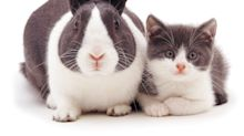 Snapcat: Felines and bunnies look exactly the same