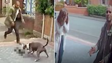 Dog owner grovels to family after his two Staffies maul cat to death in the street
