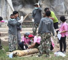 Half of the 147 tigers rescued from Thai temple have died