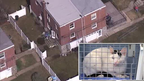 Cat hoarding at scene of house fire in NE Philadelphia, officials say