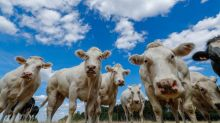 Meat production is bad for the planet. Why subsidize it?