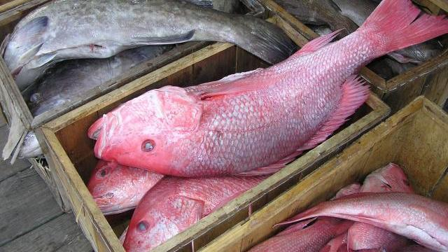 Dangerous fish at your grocery store