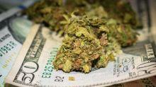 4 Prominent Marijuana Earnings Season Trends