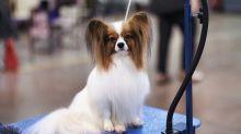 Esistono in Italia degli 'Airbnb per cani'? Sì: ecco come funzionano